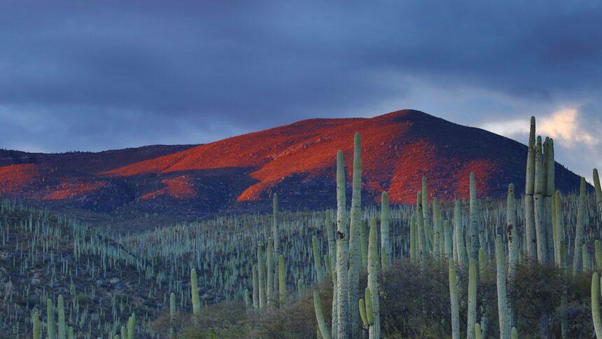Mexico mountain